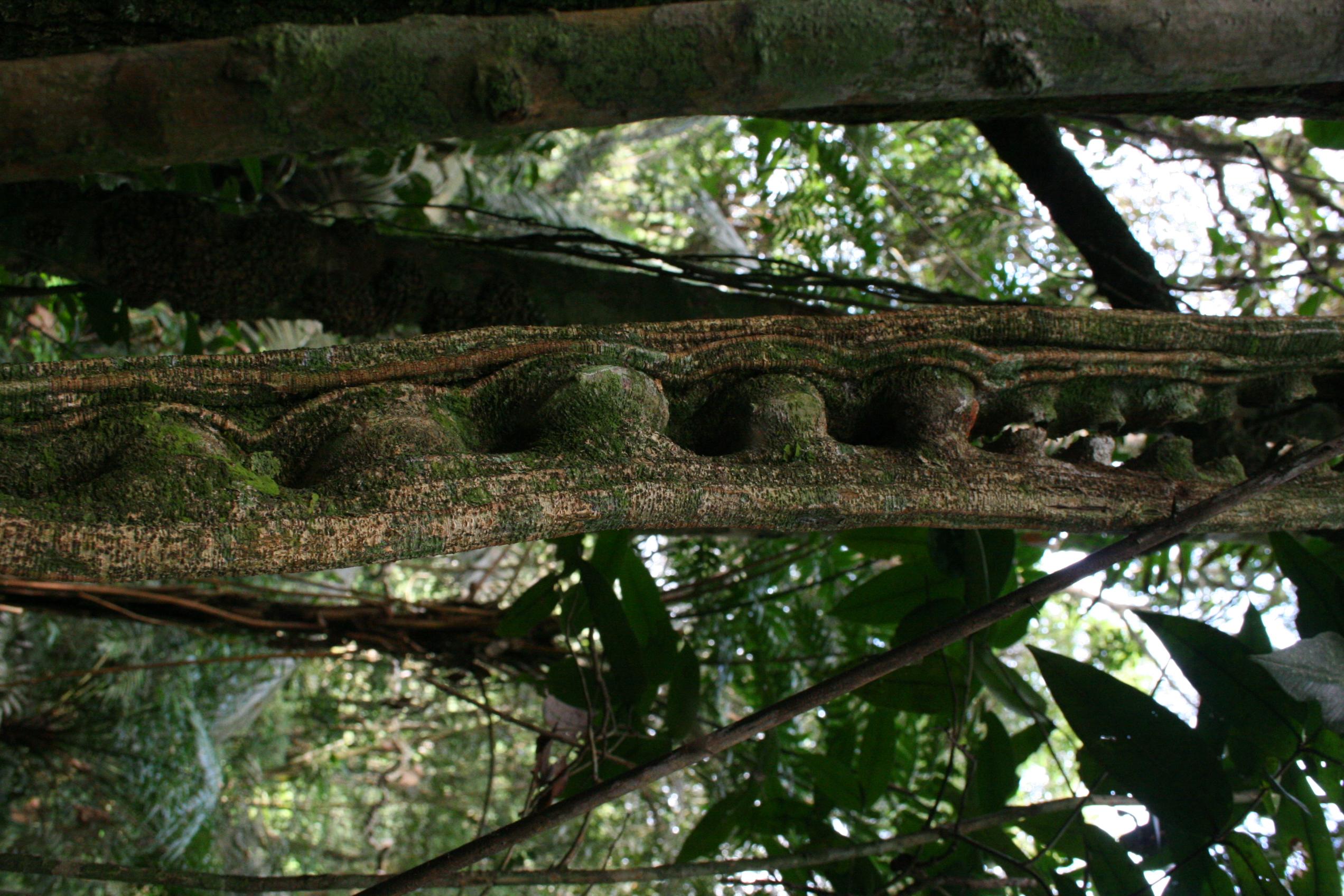 Mais uma planta que cura presente no bioma Lagamar  d1900744ba